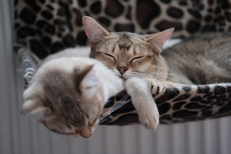 photo-of-cats-sleeping-together-2870510